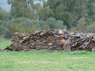 Stack of drying cork bark
